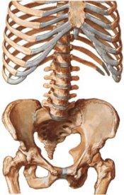 При остеопорозе костной ткани наиболее часто случаются переломы шейки бедра и тел позвонков, остеопороз, остеопороз костей