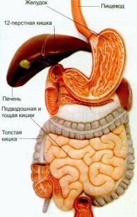МРТ органов брюшной полости, мрт брюшной полости, томография органов брюшной полости, мрт брюшной аорты