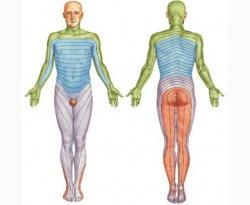 Схема сегментарной иннервации на поверхности тела человека, Невралгия, межрёберная невралгия, герпетический неврит, герпетический невралгия, постинъекционный неврит и невралгия, Посттравматическая невралгия, неврит локтевого нерва, неврит большеберцового нерва, неврит малоберцового нерва, невралгия тройничного нерва, лечение невралгии, лечить невралгию