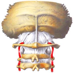 Остеохондроз шейного отдела и вертебробазилярная недосточность