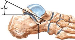 Анатомия связок и суставной поверхности голеностопного сустава в норме, травмы голеностопного сустава