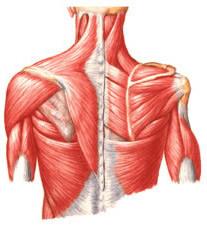 Диагностика артроза плечевого сустава, плечелопаточный периартроз
